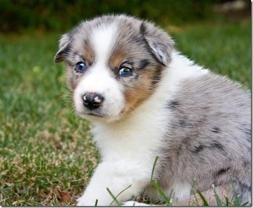 Puppy a day